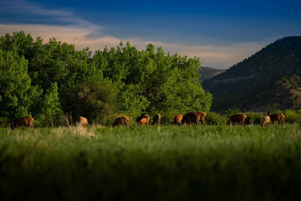 Dawson Elk Valley Ranch - New Mexico Ranches For Sale - Trees and Cattle